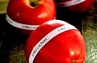 Red organic apples with organic stickers on them