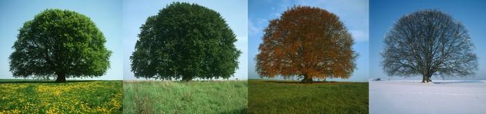 Les arbres s'adaptent aux saisons changeantes